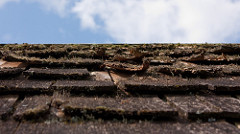 How To Tell If You Need A New Roof Moss Algae