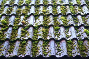 Remove roof algae
