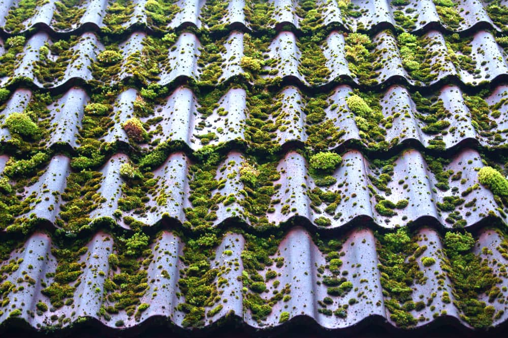 How to Remove Roof Algae and Moss