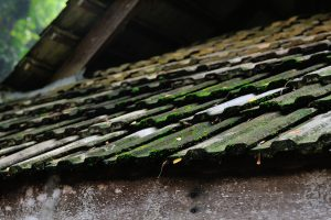 remove roof moss