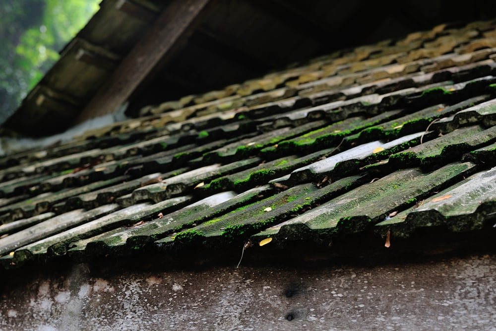 How To Remove Roof Algae And Moss American Dream Restoration
