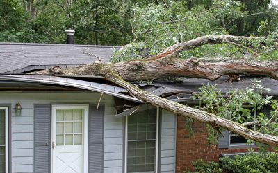 Roof Wind Damage: What It Is and How To Spot It